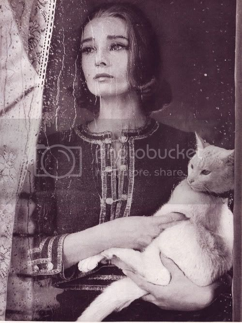 audrey hepburn cat katze